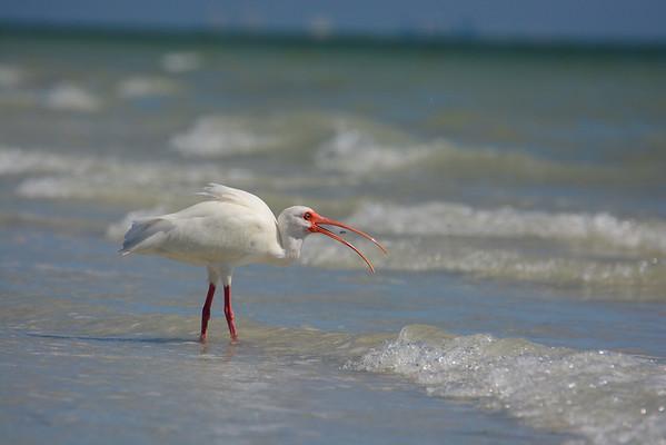 Southwestern Florida 2014